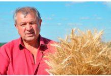 полтавские сорта пшеницы для аграриев