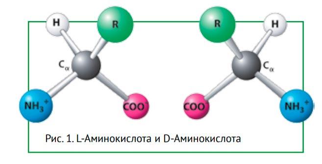 L-Аминокислота и D-Аминокислота