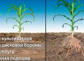 системы обработки почвы