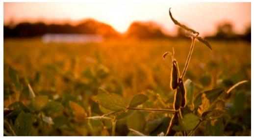 Повышение урожайности сои