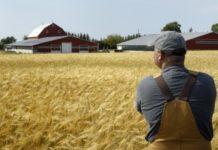 Государственная поддержки фермерских хозяйств в Украине