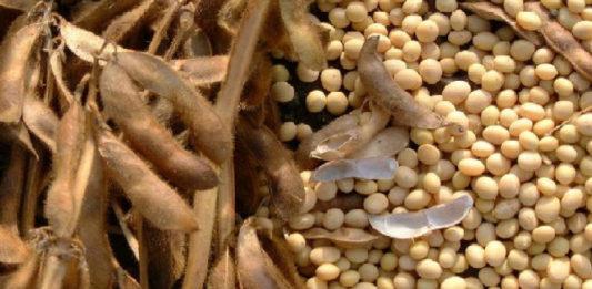 сушка семян сои