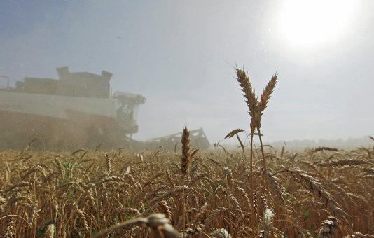 Урожай зерновых в Украине 2017