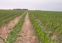 Экологические проблемы при выращивании кукурузы