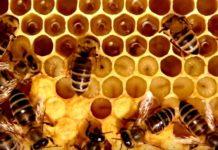 хранение и применение меда