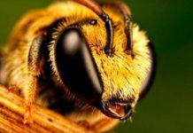 мед и его химический состав