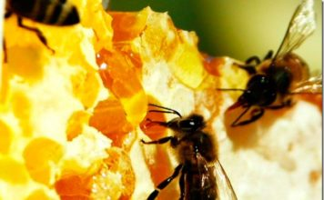 Пчелиный зимовник