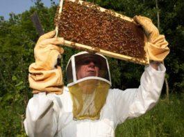 уход за пчелами