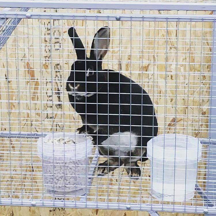 кормление кроликов породы карликовый рекс