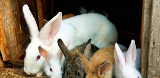 нормы микроклимата для содержания кроликов