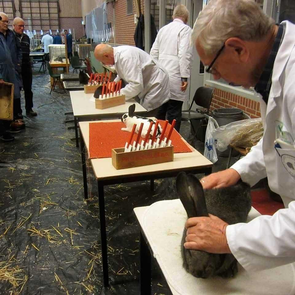 выставка кроликов в Нидерландах