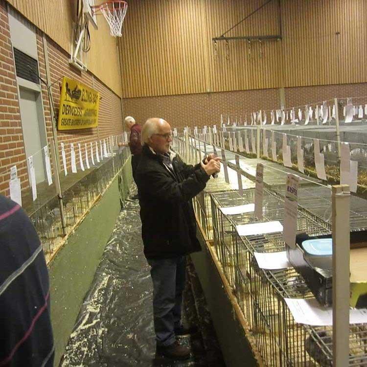 выставка кроликов в Нидерландах2