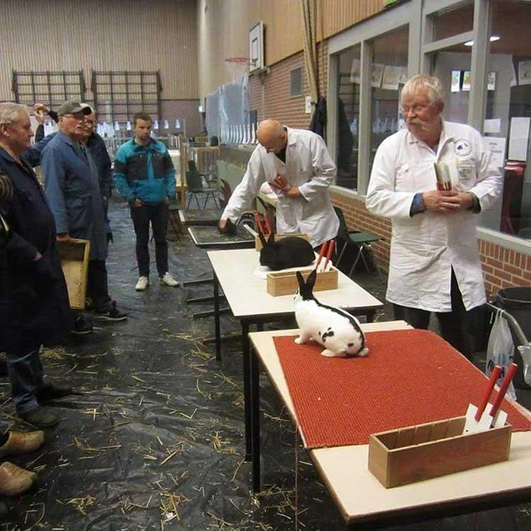 выставка кроликов в Нидерландах3