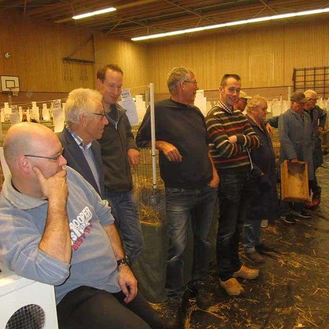 выставка кроликов в Нидерландах4