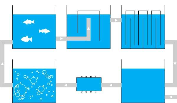 Какую рыбу выгодно разводить в УЗВ.