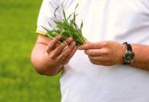 виды азотных удобрений